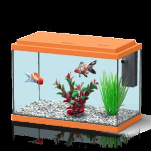 Funny Fish 35