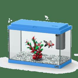 Funny Fish 30