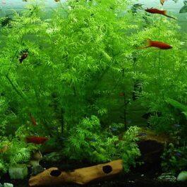 Water- & plantverzorging