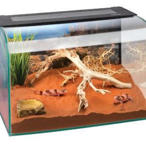 Exo Terra Habisphere desktop terrarium
