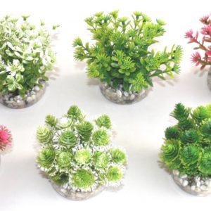 Sydeco Nano plant natural 6 cm