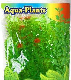Aqua plant green 6st