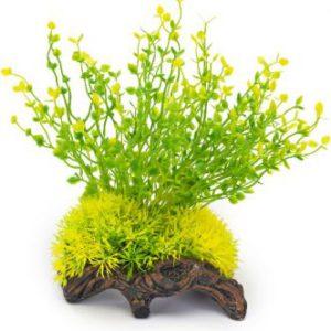 Plant op hout groen en geel