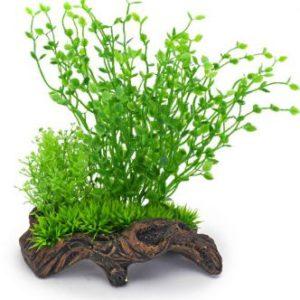 Plant op hout groen