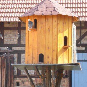 Huisvesting duif
