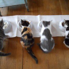 Voeder/drink bak kat