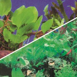 Foto achterwand planten 1/5   100 x 50 cm