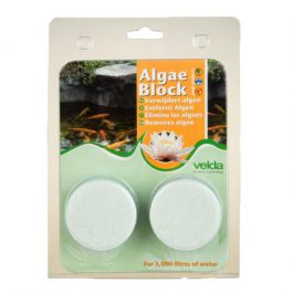 Algae blocks (2st)