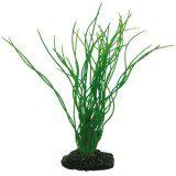 Hobby Plant Sagittaria 20 cm