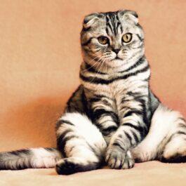 Kattensnacks