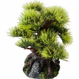 Bonsai Medio Sort B 15 cm