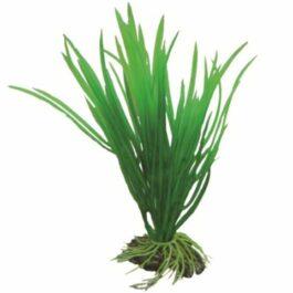 Hobby plant Cyperus 16 cm