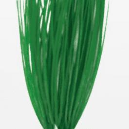 Wave plant Acorus