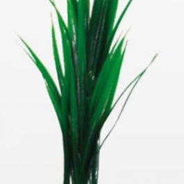 Wave plant Bamboo