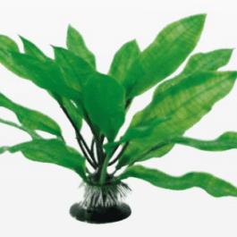 Wave plant Echinodorus
