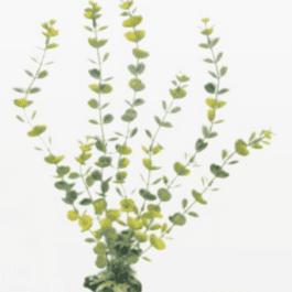 Wave plant Hydrocotylle