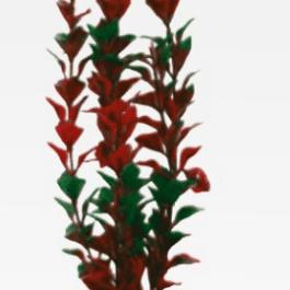 Wave plant Ludwigia