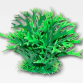 Wave plant Replica felce