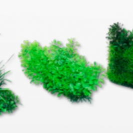 Wave plant green flora