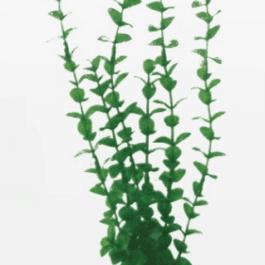Wave plant Rotala