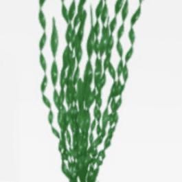 Wave plant Valisneria